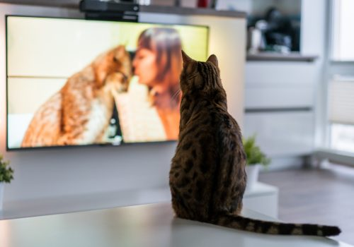 Cat watching TV - TV Abos