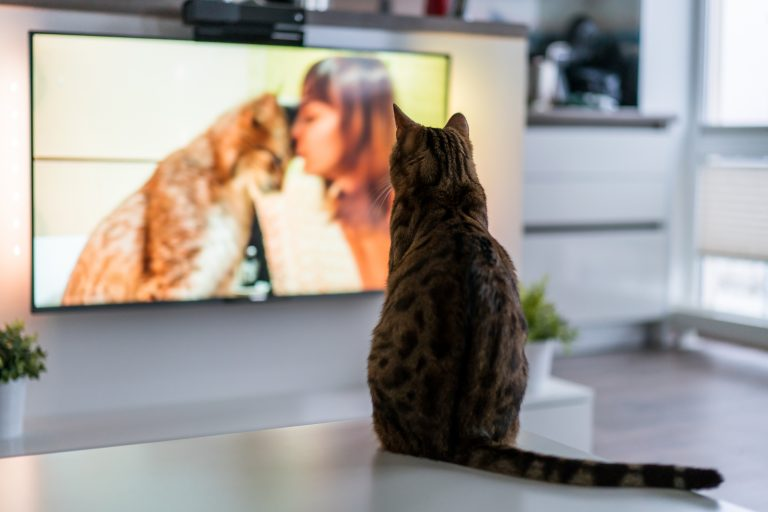 Cat watching TV - TV Abos